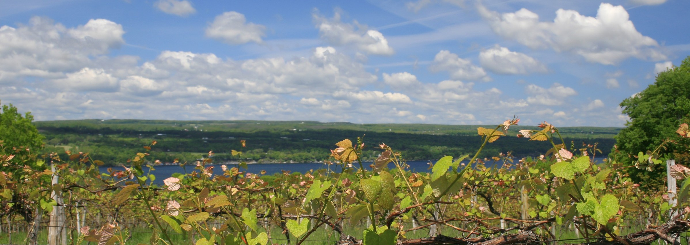 finger_lakes_vineyard-e1440788677644
